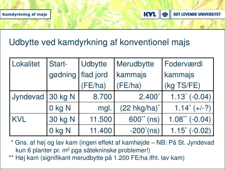 Udbytte ved kamdyrkning af konventionel majs