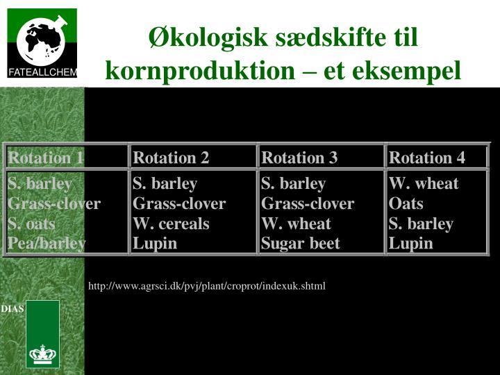 Økologisk sædskifte til kornproduktion – et eksempel