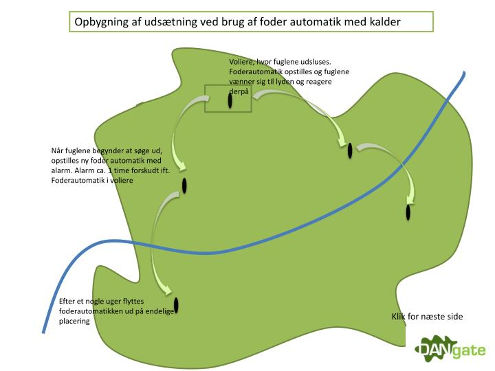 Opbygning af udsætning ved brug af foder automatik med kalder