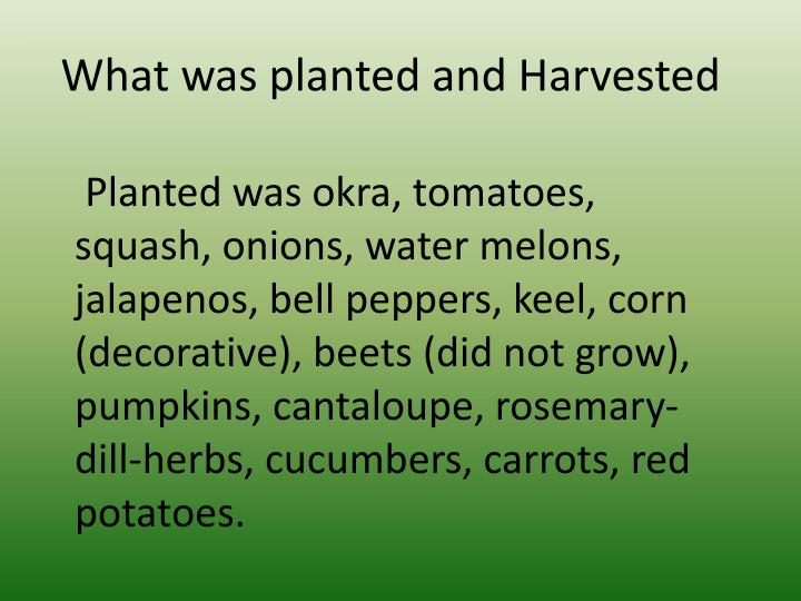 What was planted and Harvested