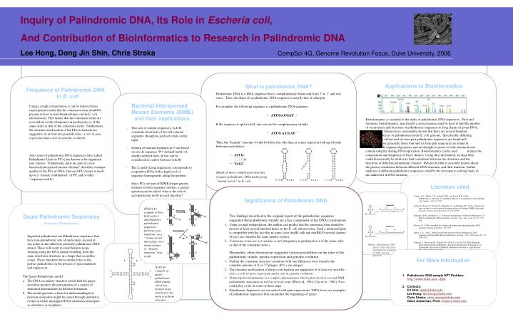 Inquiry of Palindromic DNA, Its Role in