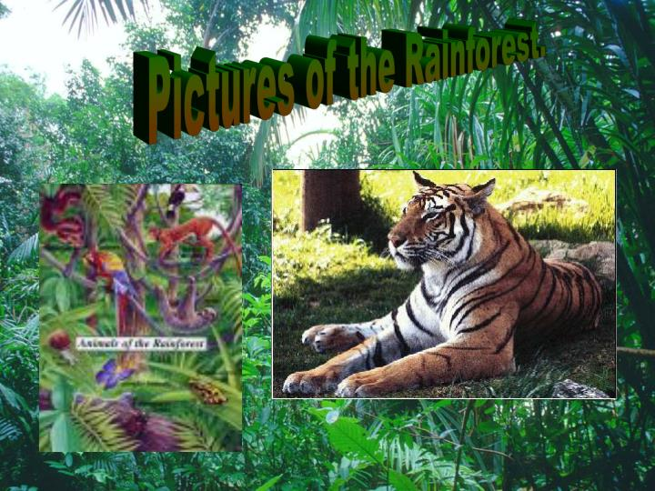 Pictures of the Rainforest.