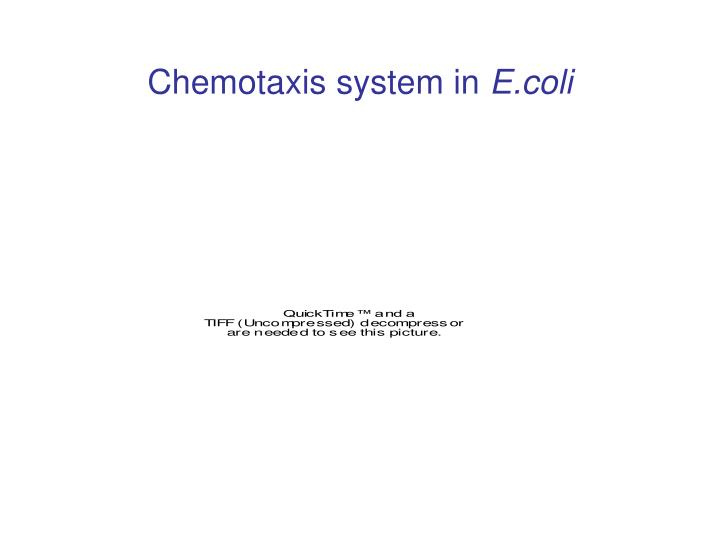 Chemotaxis system in e coli