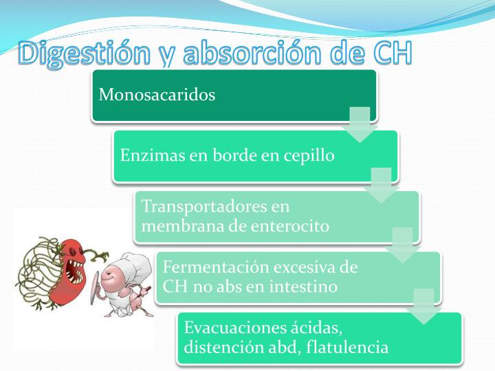Digestión y absorción de CH