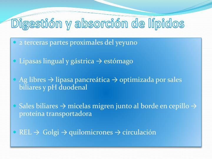 Digestión y absorción de lípidos