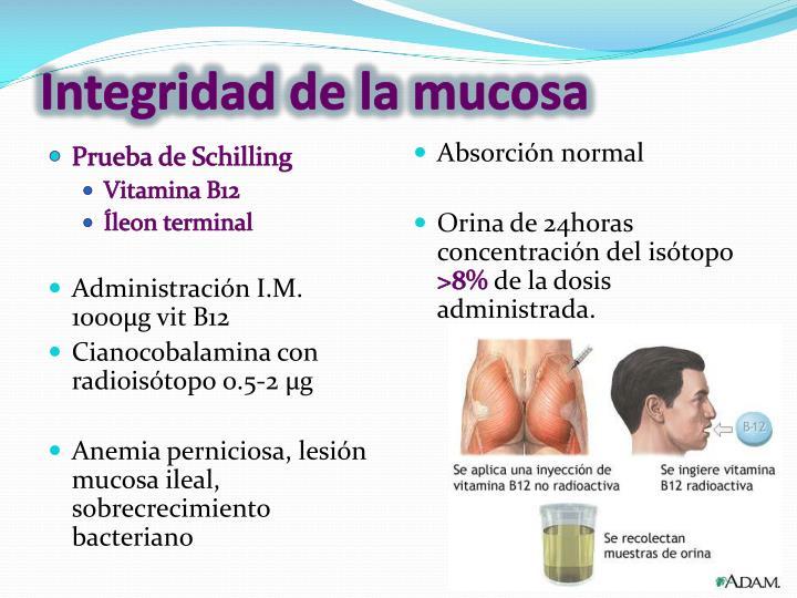 Integridad de la mucosa