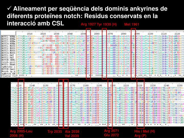 Alineament per seqüència dels dominis ankyrines de diferents proteïnes notch: Residus conservats en la interacció amb CSL