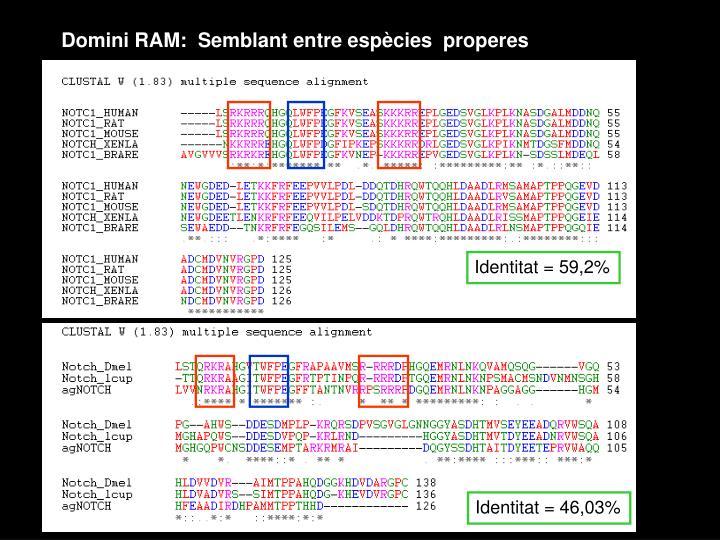Domini RAM:  Semblant entre espècies  properes