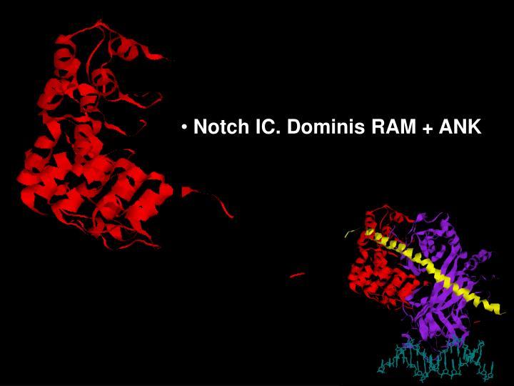Notch IC. Dominis RAM + ANK