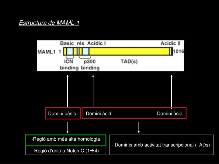 Estructura de MAML-1