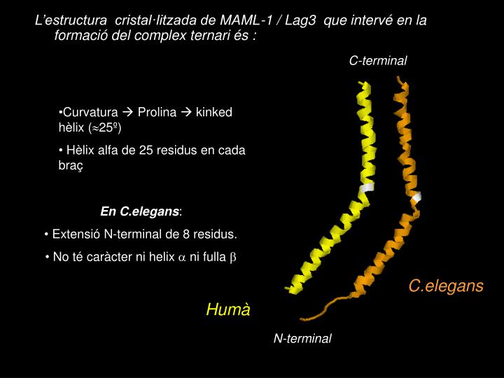 C-terminal
