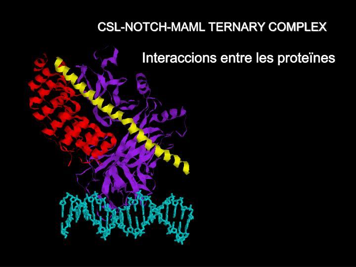 CSL-NOTCH-MAML TERNARY COMPLEX