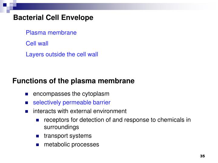Bacterial Cell Envelope