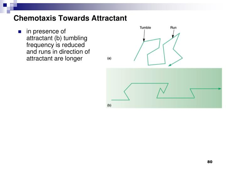 Chemotaxis Towards Attractant