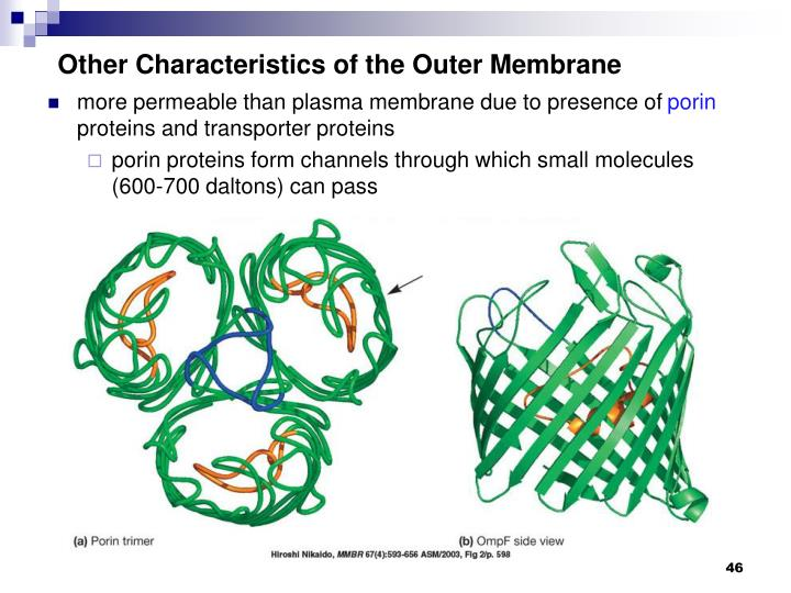 Other Characteristics of the Outer Membrane