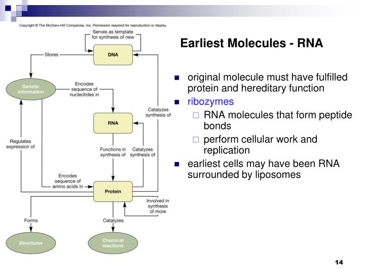 Earliest Molecules - RNA
