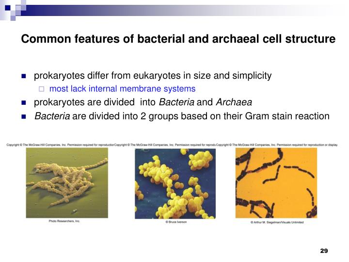 Common features of bacterial and archaeal cell structure