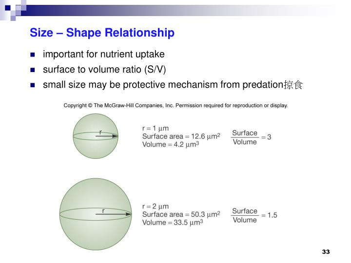Size – Shape Relationship