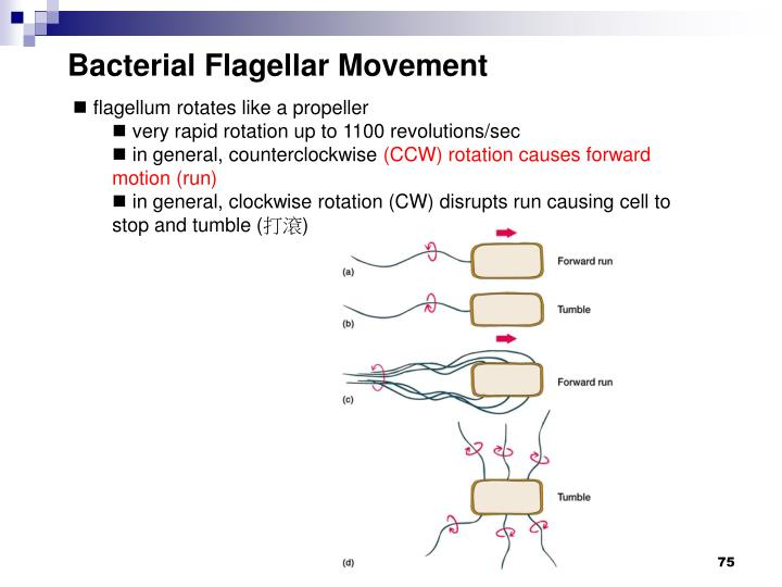 Bacterial Flagellar Movement