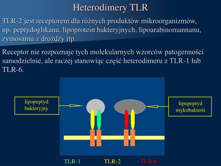 Heterodimery TLR