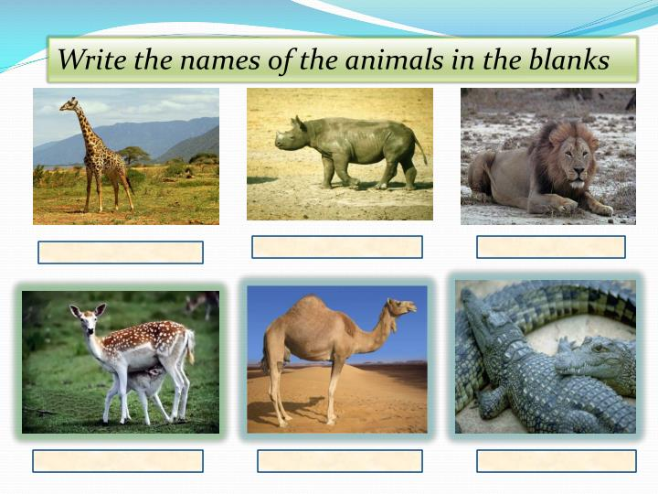 Write the names of the animals in the blanks