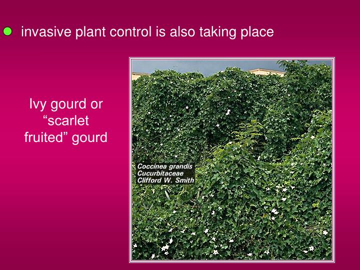 invasive plant control is also taking place