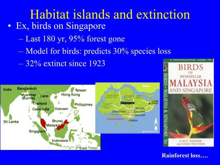 Habitat islands and extinction