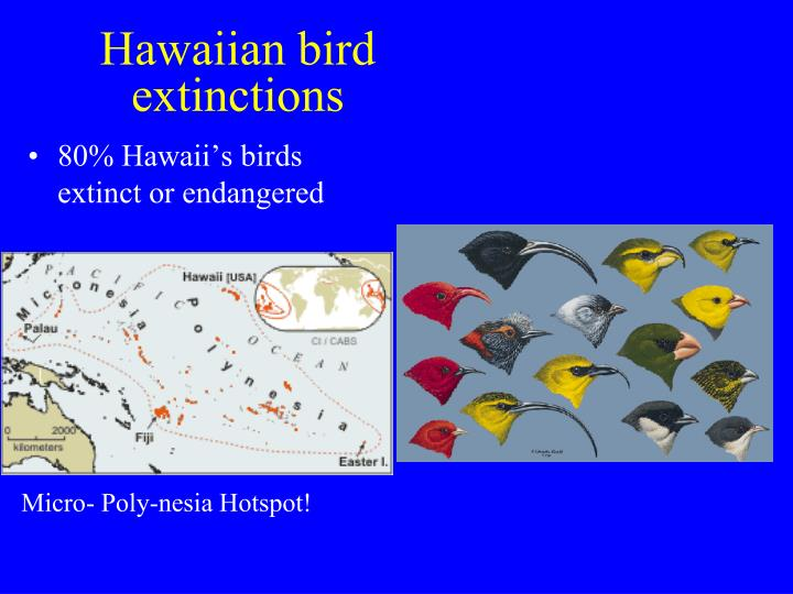 Hawaiian bird extinctions