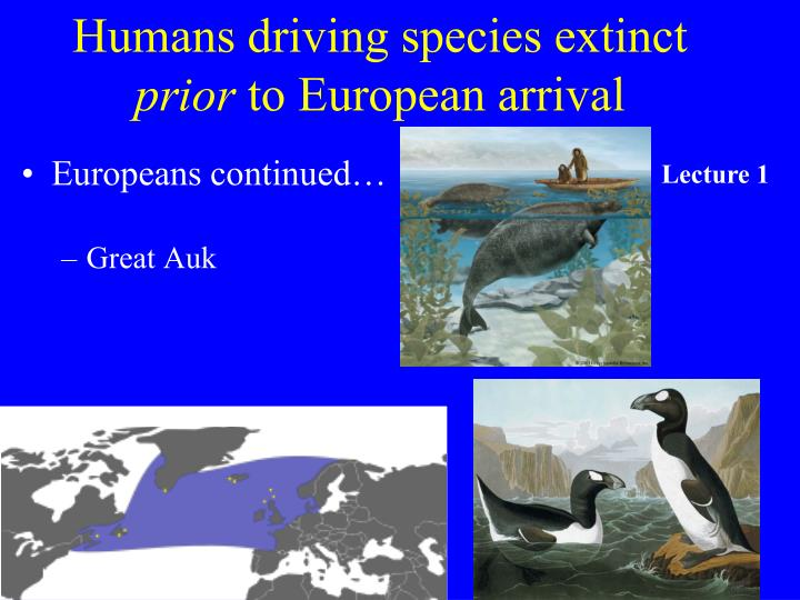 Humans driving species extinct