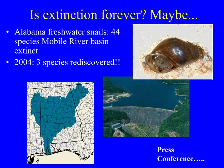 Is extinction forever? Maybe...
