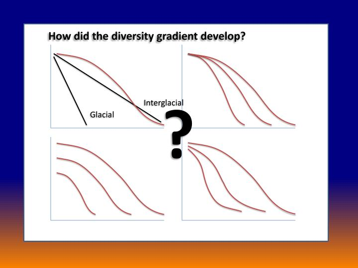 How did the diversity gradient develop?