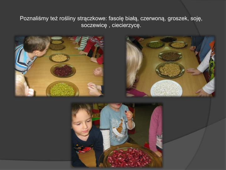 Poznaliśmy też rośliny strączkowe: fasolę białą, czerwoną, groszek, soję, soczewicę , ciecierzycę.