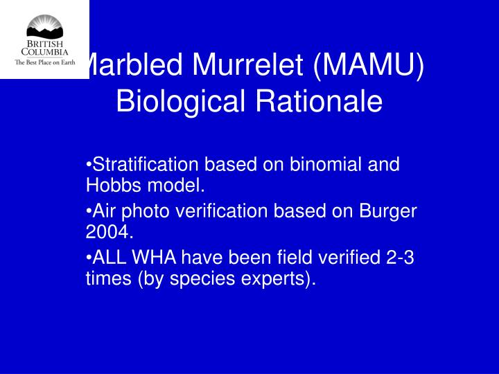 Marbled Murrelet (MAMU)