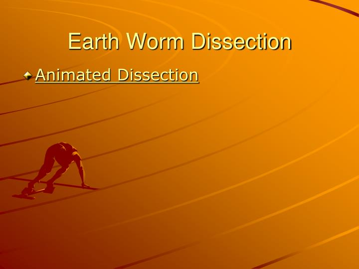 Earth Worm Dissection