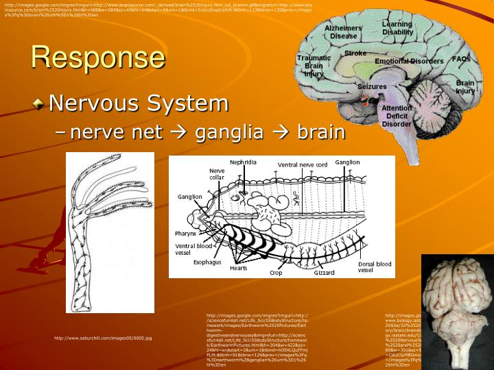 http://images.google.com/imgres?imgurl=http://www.brainsource.com/_derived/brain%2520injury.htm_txt_brainm.gif&imgrefurl=http://www.brainsource.com/brain%2520injury.htm&h=488&w=584&sz=49&hl=en&start=6&um=1&tbnid=5nIcoSnqzUsfcM:&tbnh=113&tbnw=135&prev=/images%3Fq%3Dbrain%26um%3D1%26hl%3Den