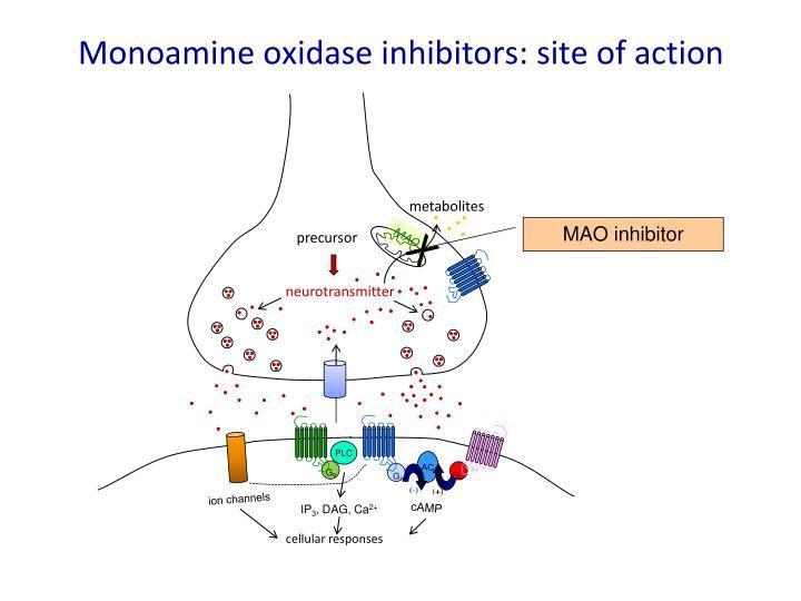 Monoamine oxidase inhibitors: site of action