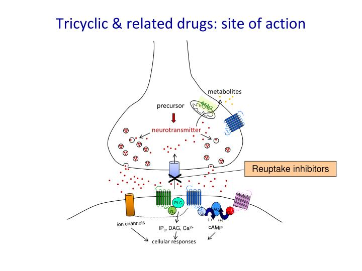 Tricyclic & related drugs: site of action