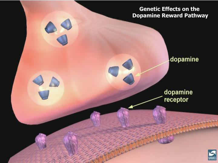 Genetic Effects on the