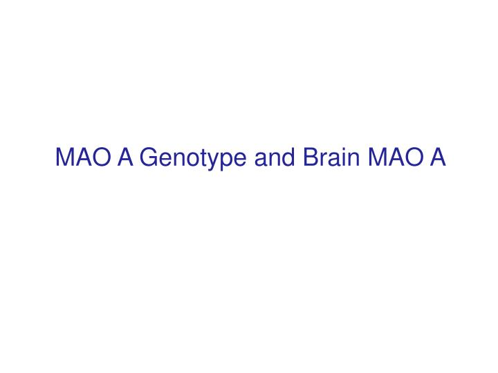 MAO A Genotype and Brain MAO A