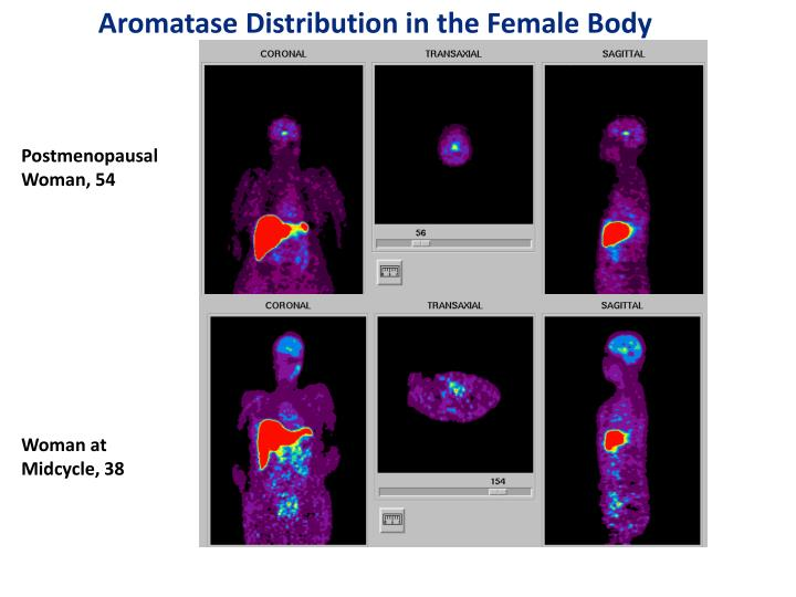 Aromatase Distribution in the Female Body