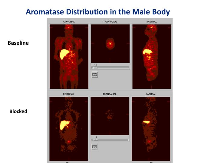 Aromatase Distribution in the Male Body