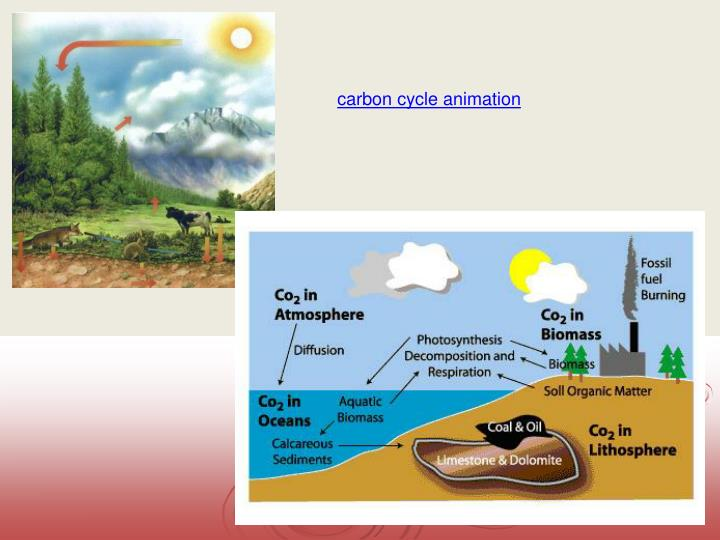 carbon cycle animation