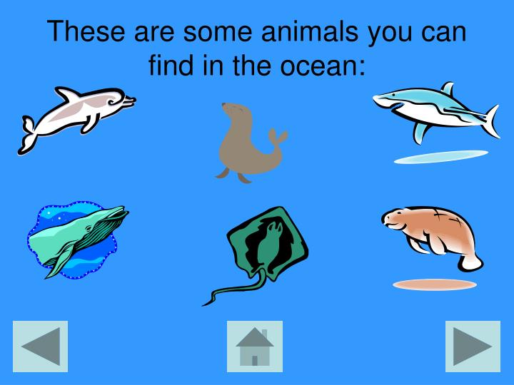 These are some animals you can find in the ocean: