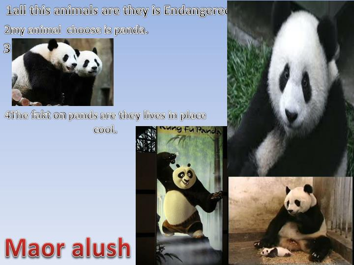 1all this animals are they is Endangered.