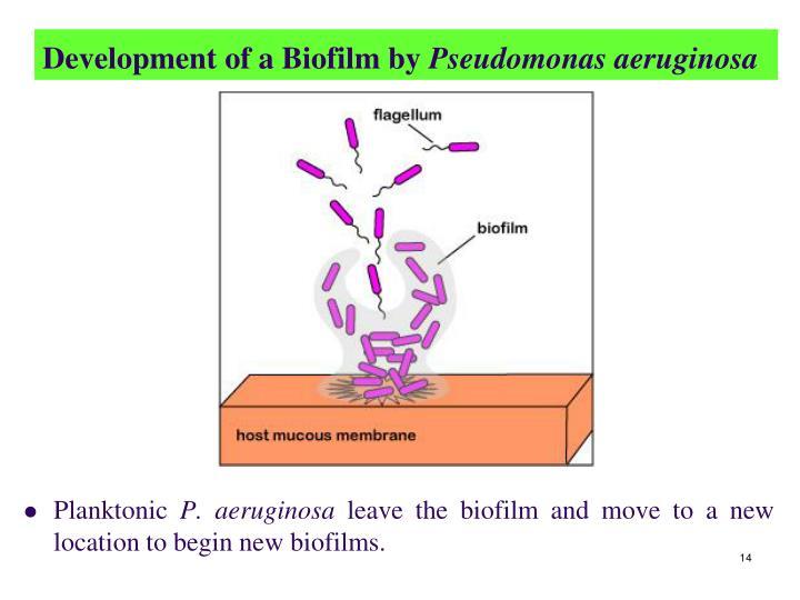 Development of a Biofilm by