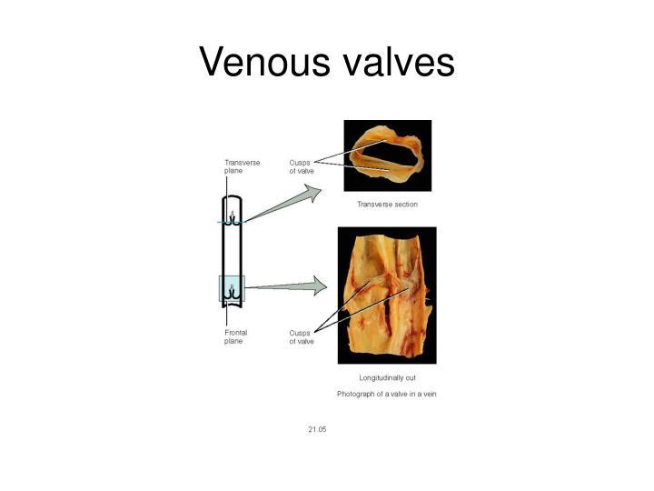 Venous valves
