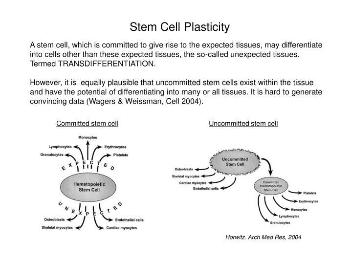 Stem Cell Plasticity