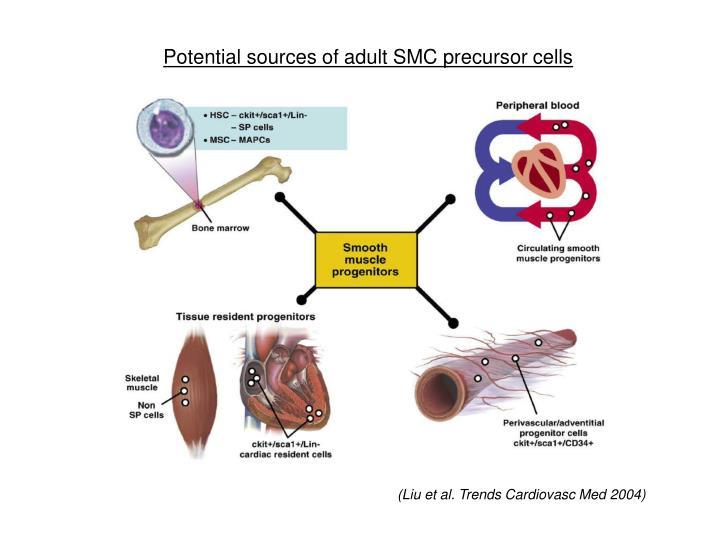 Potential sources of adult SMC precursor cells