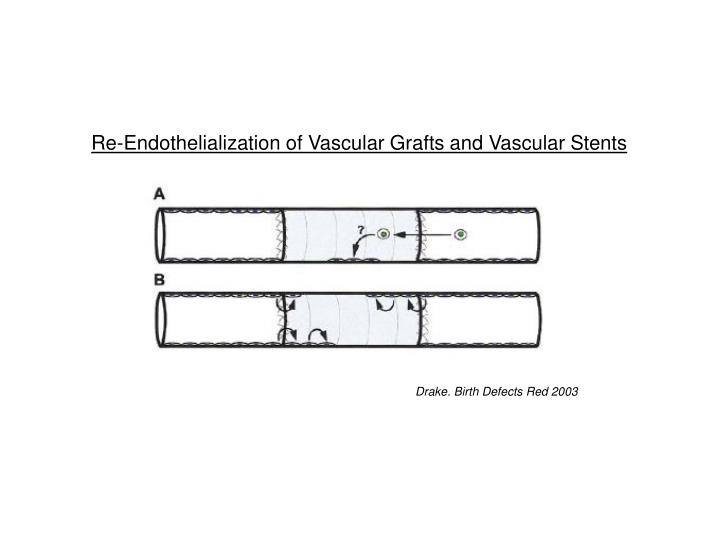 Re-Endothelialization of Vascular Grafts and Vascular Stents
