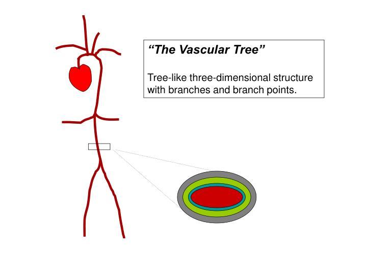 """The Vascular Tree"""